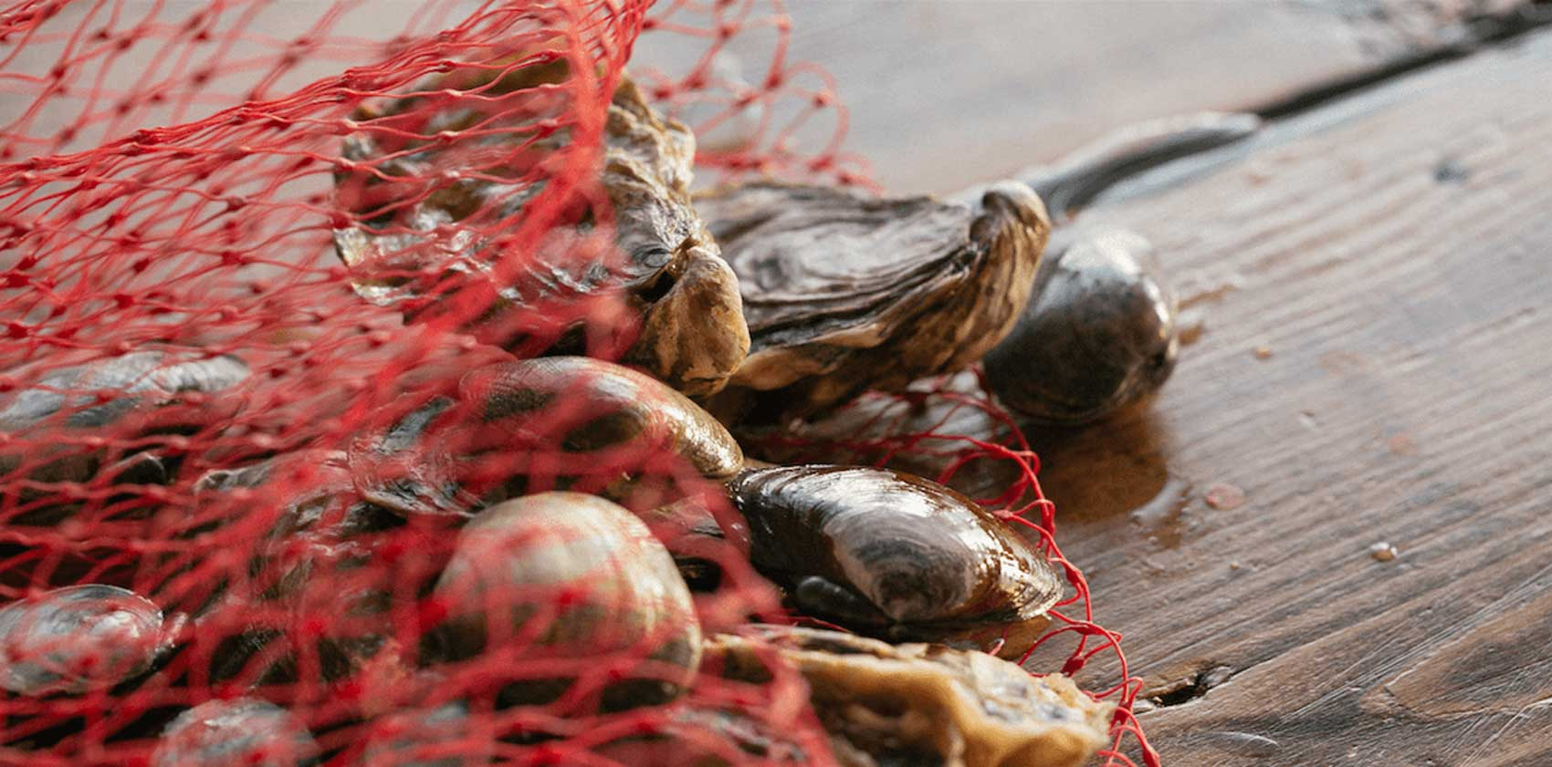 Baywater Shellfish Company